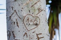 Tree trunk with cut-out word. Close-up of word carved on bark of tree trunk in bright sunlight stock photography