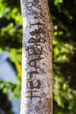 Tree trunk with cut-out word. Close-up of word carved on bark of tree trunk in bright sunlight stock images