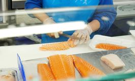 Close up worker hand slicing raw salmon preparing for sell at fi. Sh market. Worker prepare salmon portion for cooking. Worker show customer how to slice salmon Royalty Free Stock Photos