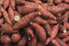 Close up yam pile in the market royalty free stock image