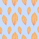 Close up of yellow autumn leaf seamless pattern background stock images