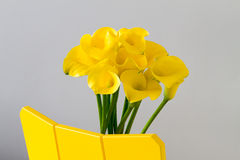 Close-up of yellow calla lilies Stock Photography