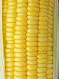 Close-up yellow corn Royalty Free Stock Photos
