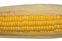 Close-up yellow corn Stock Photo