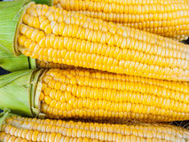Close-up yellow corn. A Close-up fresh corn,Bakground Stock Photos