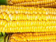 Close-up yellow corn. A Close-up fresh corn,Bakground Royalty Free Stock Image