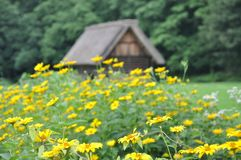 Thatched Roof House in Shirakawago, Japan Stock Photography