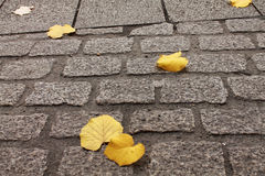Close up of yellow dead tree leaves lying on the floor street. Autumn fall scenery of yellow dead fall tree leaves lying on the road street Stock Image