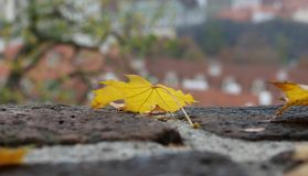 The close up of yellow fallen Maple leaf on the castle brick wall. The close up of yellow fallen Maple leaf on the castle brick wall royalty free stock photography