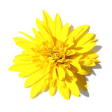 Close-up of a yellow flower Stock Image