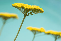 Close-up of yellow flower Stock Images