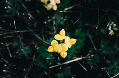 Close-up of Yellow Flower Blooming Outdoors Stock Photo