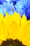 Close up of yellow flower and petals Stock Images