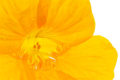 Close up into yellow flower Stock Image