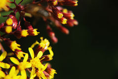 Close up yellow flowers royalty free stock photo