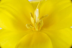 Close up on yellow fresh flower. Stock Photos