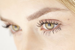 Close up of yellow green eyes of attractive woman Royalty Free Stock Photo