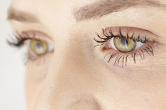 Close up of yellow green eyes of attractive woman Stock Images