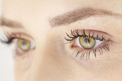 Close up of yellow green eyes of attractive woman Stock Photography