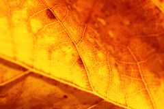 Close-up on yellow leaf. Background Royalty Free Stock Photography
