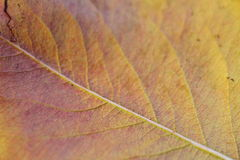 Close-up on yellow leaf. Background Stock Photography