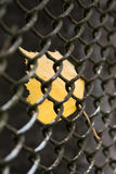 Close-up of yellow leaf in fence Royalty Free Stock Photo