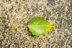 Close up yellow leaves on concrete Royalty Free Stock Images