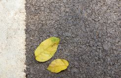 Close up yellow leaves on concrete ground Stock Photos