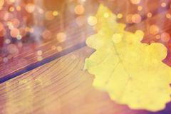Close up of yellow oak tree autumn leaf on wood Royalty Free Stock Photography