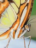 Close up of a yellow orange butterfly. Close up portrait of a yellow orange Butterfly on in a park royalty free stock images