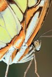 Close up of a yellow orange butterfly. Close up portrait of a yellow orange Butterfly on in a park stock photo
