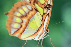 Close up of a yellow orange butterfly. Close up portrait of a yellow orange Butterfly on in a park royalty free stock photo