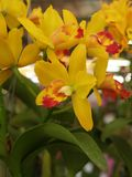 Close-up of  yellow orchid on a colorful natural background stock photography