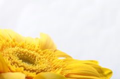 Close up of yellow petals Royalty Free Stock Photos