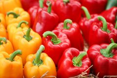 Yellow and red bell pepper group on rice straw for sale royalty free stock images