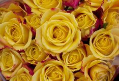 Close up yellow roses. In the market royalty free stock photos