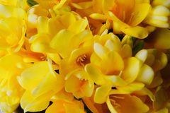 Close up of yellow spring flowers stock image