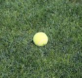 Close up Yellow tennis ball on green grass Royalty Free Stock Photo