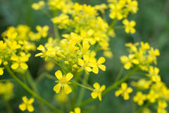 Close-up yellow wildflowers. The focus in the foreground. Stock Photo