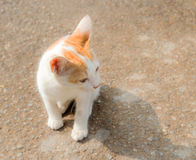 Close up young cat on the floor Stock Images