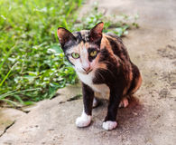 Close up young cat on the floor Royalty Free Stock Photography