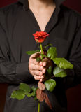 Close up of young man with rose in black shirt royalty free stock photo