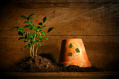 Close-up of young plant  with clay pot Stock Photo