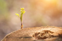 Close up young plant growing on tree stump Stock Photography