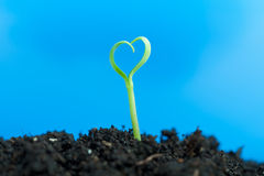 Close-up on young seedling growing out of soil Royalty Free Stock Image