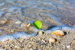 Close up of young small sprout on the beach. concept stock photography