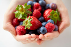 Close up of young woman hands holding berries. Healthy eating, vegetarian food and people concept - close up of young woman hands holding berries Royalty Free Stock Photos
