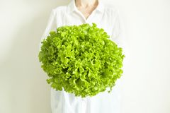 Young woman chef in white cotton shirt holding harvest heap of freshly cut green organic lettuce salad leaves. Clean eating concep stock photography