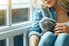 Close up of young woman petting her cat Stock Images