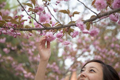 Close-Up of young woman reaching for a pink blossom on a tree branch, outdoors in the park in springtime Stock Photography